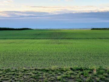 Crops 2020